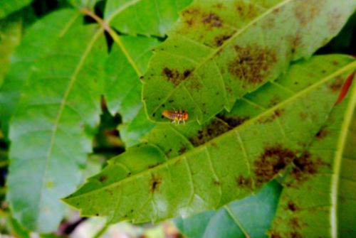 WEBINAR- The use of insects in agriculture
